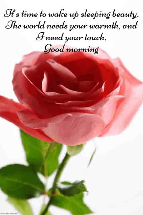 romantic message for her with hd rose pic