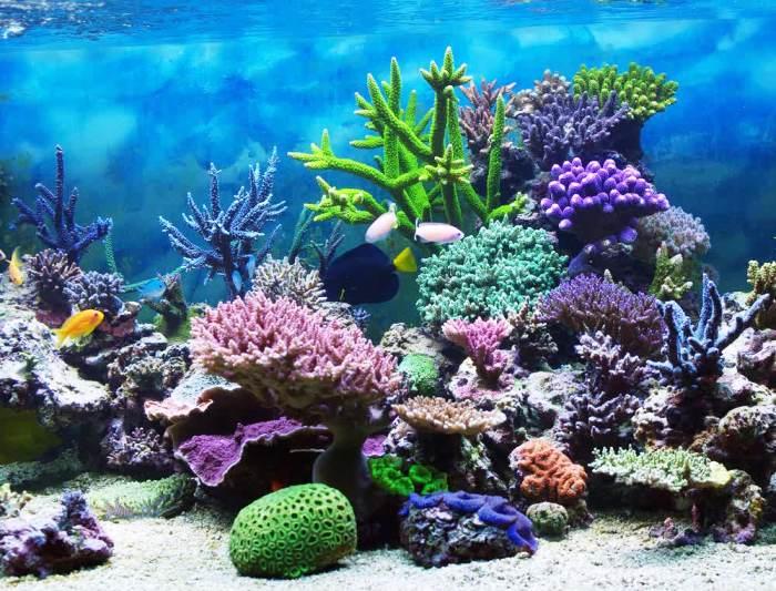 Kumpulan Makalah Dan Kliping Sekolah Ekosistem Laut Dangkal Dan
