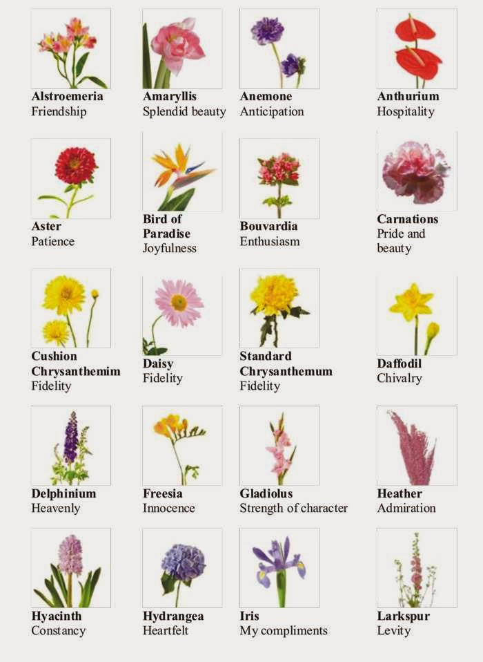 Flower Names Images – savingourboys.info