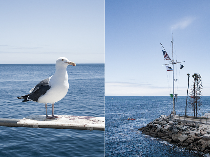 Catalina Island, Seagull, Avalon, Seaside, Ocean, Retreat