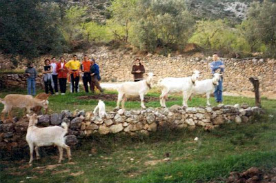 Agricultura, Ganadería, olivares, Beceite