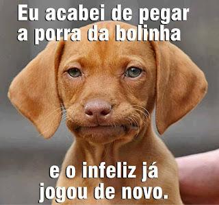 """O Dachshund é um cão baixo e longo, de patas curtas, por isso o apelido de """"cachorro salsicha""""; o pelo é curto, brilhante, liso, espesso e bem colado ao corpo, a cabeça é longa e o focinho pontiagudo, olhos ovais, orelhas são de inserção alta, penduradas, compridas e com bordas redondas.Descrição: Foto. Em foco, a carinha de um cãozinho da raça Dachshund com pelagem caramelo, olhos verdes, focinho marrom, bigodes brancos, boca fechada e focinho estufado, tipo: saco cheio. No topo lê-se: Eu acabei de pegar a porra da bolinha; e no rodapé: e o infeliz já jogou de novo."""
