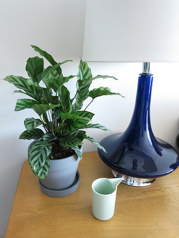Calathea plant on a mid-century modern Snyder vintage side table next to a blue lamp and mint green watering cup