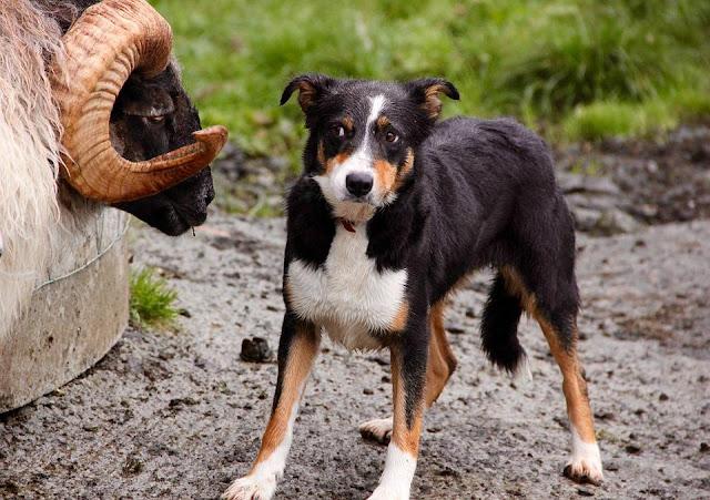 """""""Bệnh"""" căng thẳng ở chó và nguyên nhân gây bệnh"""