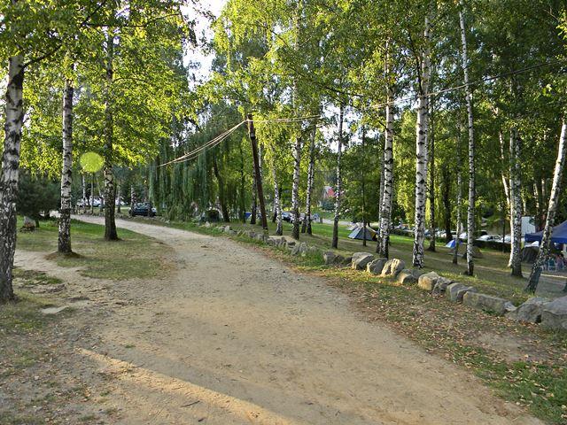 las, brzozy, namioty, Skorochów