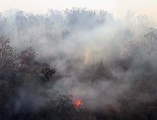 Incendios afectan el Parque Nacional del Pico de Orizaba