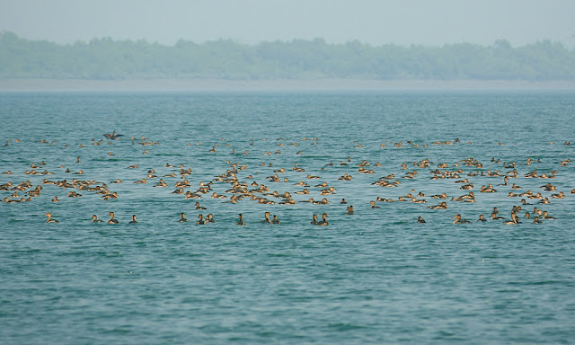 Sand banks, Sea, Ocean, migratory birds