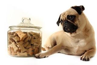 los mejores premiso para perros