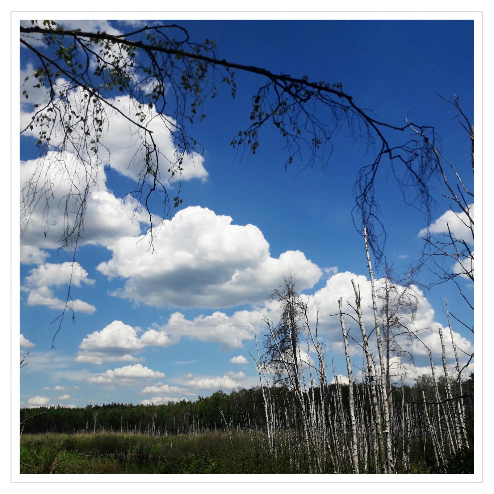 Stara Miłosna, Lasy w Starej Miłosnej, szlaki w Mazowieckim Parku Krajobrazowym