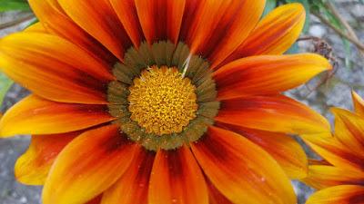 (Almost) Wordless Wednesday - Grandma's Flowers, flower photos