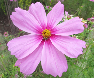 Backyard Blooms a Summer Garden Tour