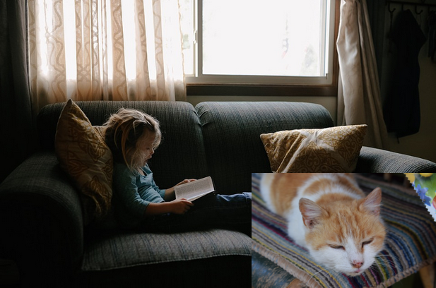 77b1079b4780 Δεν χρειάζετε να κάνετε τέστ! Δείτε 9 σημάδια που δείχνουν υψηλό IQ  -Ξενύχτι και αγάπη περισσότερο για τις γάτες