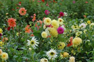 रंग बिरंगे फूल