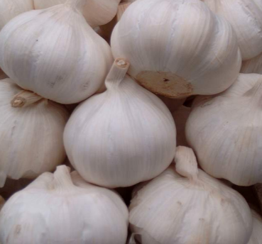 Garlic (lasun) Prevents multiple types of Cancer