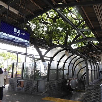 萱島駅構内(3・4番線ホーム)大クスノキ