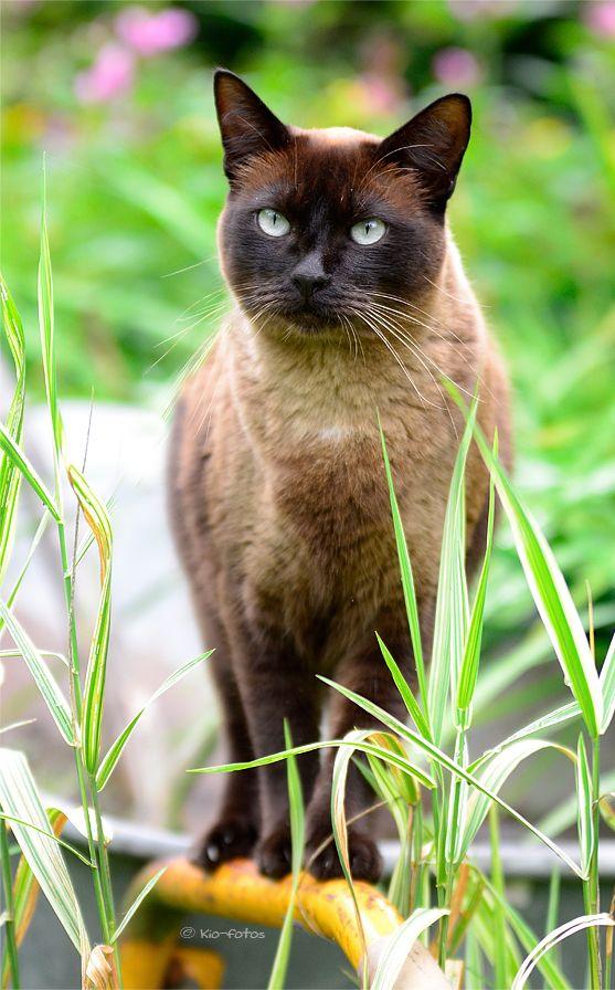 Top 5 Most Friendliest Cat Breeds