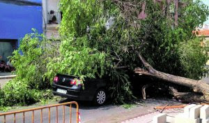proteger la pintura del coche en otoño, coche aplastado por un arbol