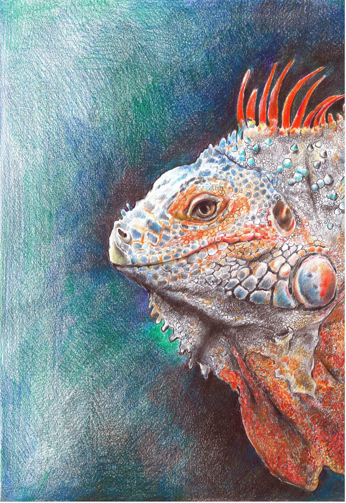 Reda Iguana - Neda Zereshkian