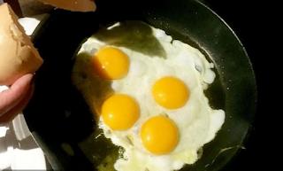 Βρήκαν αυγό με 4 κρόκους – Μια στα 11 δισεκατομμύρια οι πιθανότητες να συμβεί