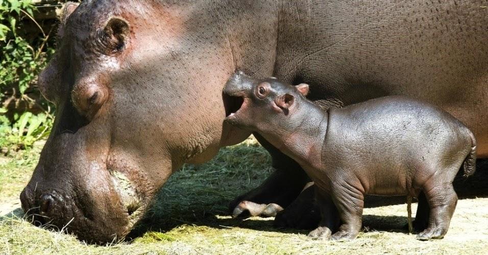 Zoologico-Basileia-Suiça-Zoo