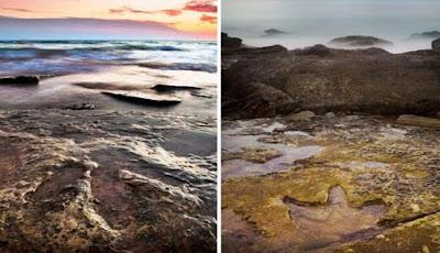 Jejak Kaki Dinosaurus Terbesar ditemukan di Australia