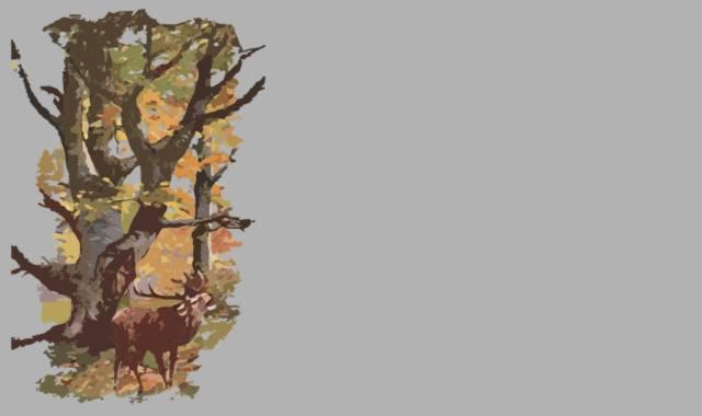 Wald und röhrender Hirsch
