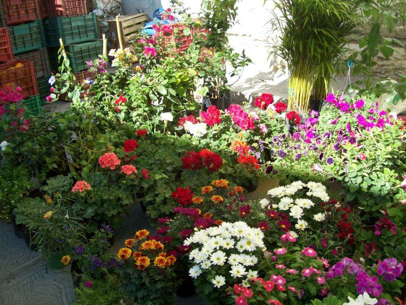 El cuexcomate mi rcoles de plaza en tamazul pam oaxaca for Algunas plantas ornamentales
