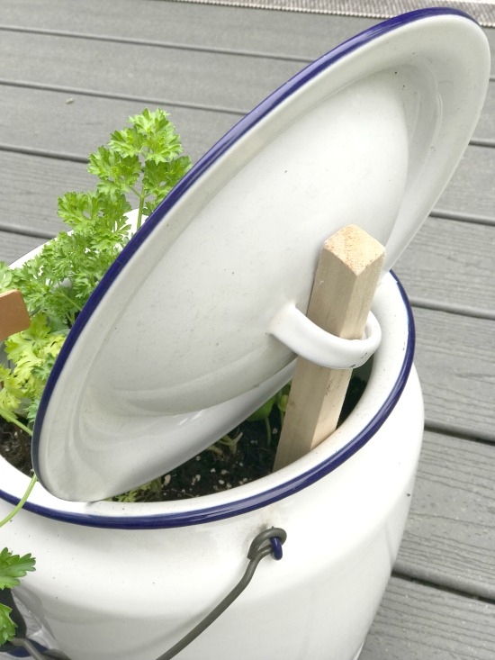 Using a Vintage Enamelware pot as an Herb Garden