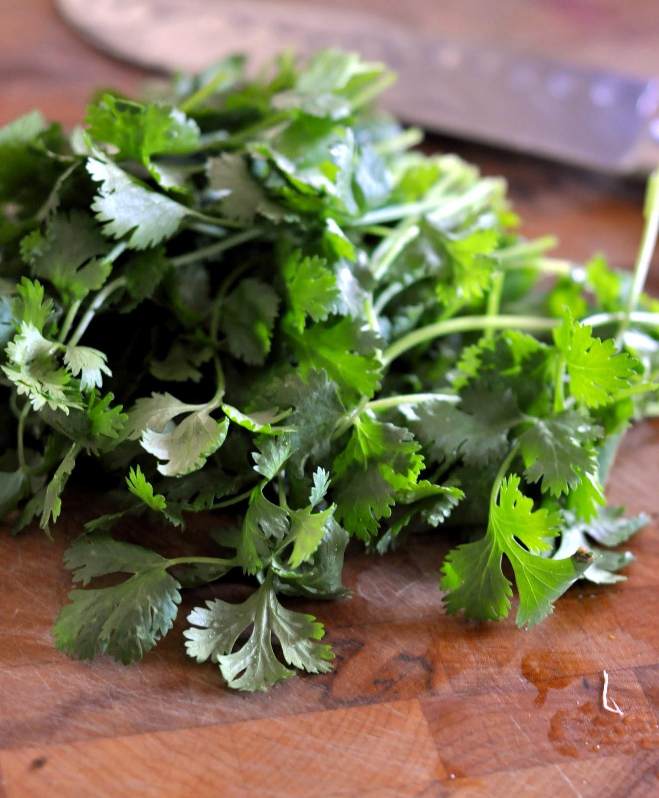 Fresh-Cilantro-tasteasyougo.com