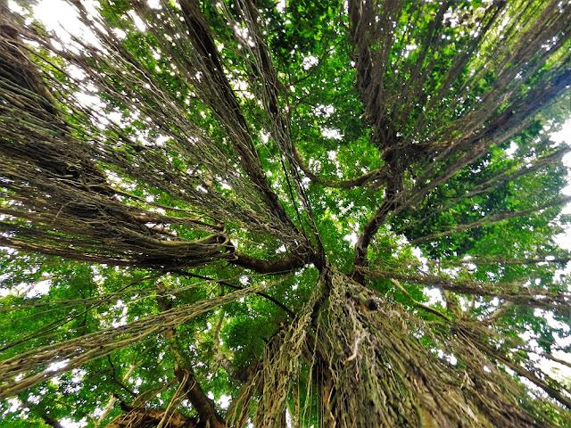 Foresta delle scimmie Bali monkey forest