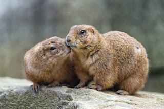 Pasangan hewan yang cute
