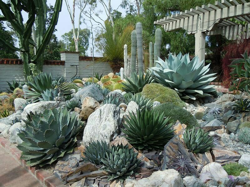 50 indoor and outdoor succulent plants and garden ideas for Backyard landscaping plants