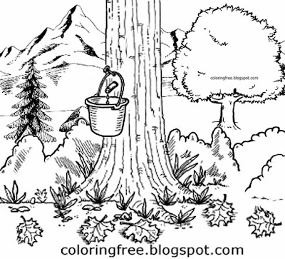 Printable natural world Canadian colouring image maple tree syrup tap countryside landscape drawings