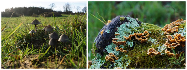 fungi and moss; Castle ward - C. Gault 2019
