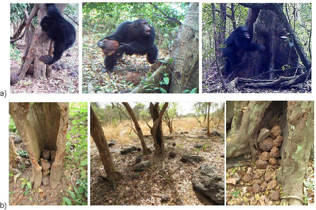 Stunning New Footage Confirms That Chimps Worship And Believe In God