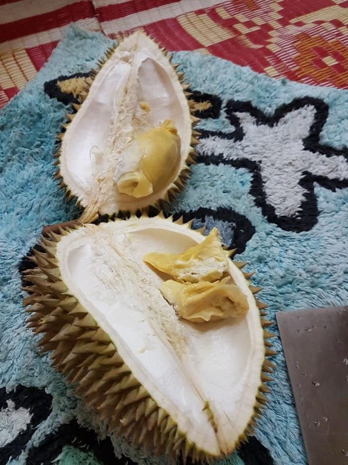 Mengapakah Dengan Durian?