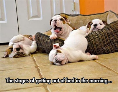 Funny Dog Humor : It's hard to get out of bed
