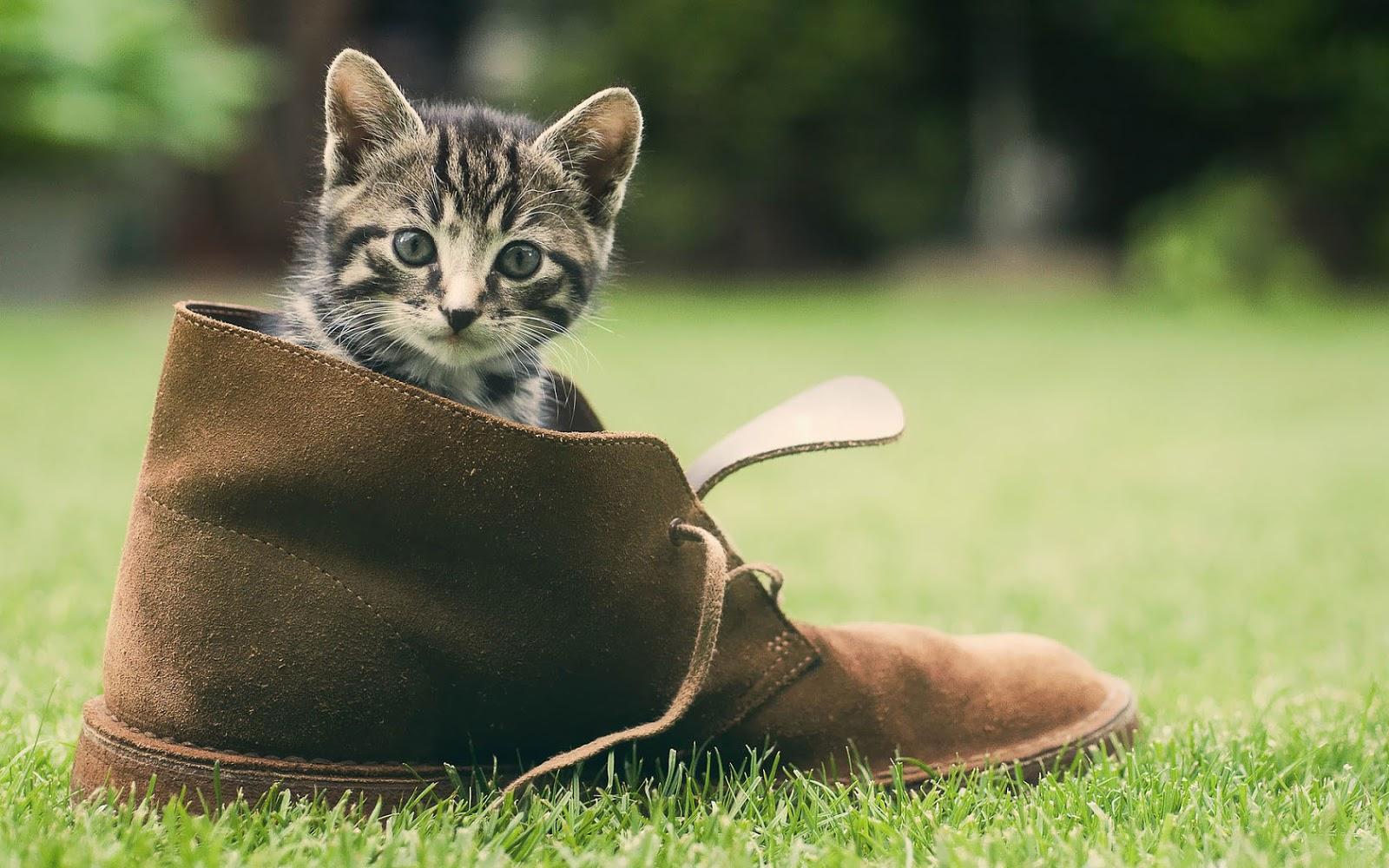 40 Prachtige Katten Wallpapers En Foto S Achtergronden