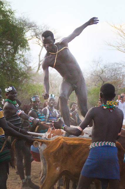 bena boy jumping on the back of bulls in omo valley, ethiopia, as part of a coming of age ceremony