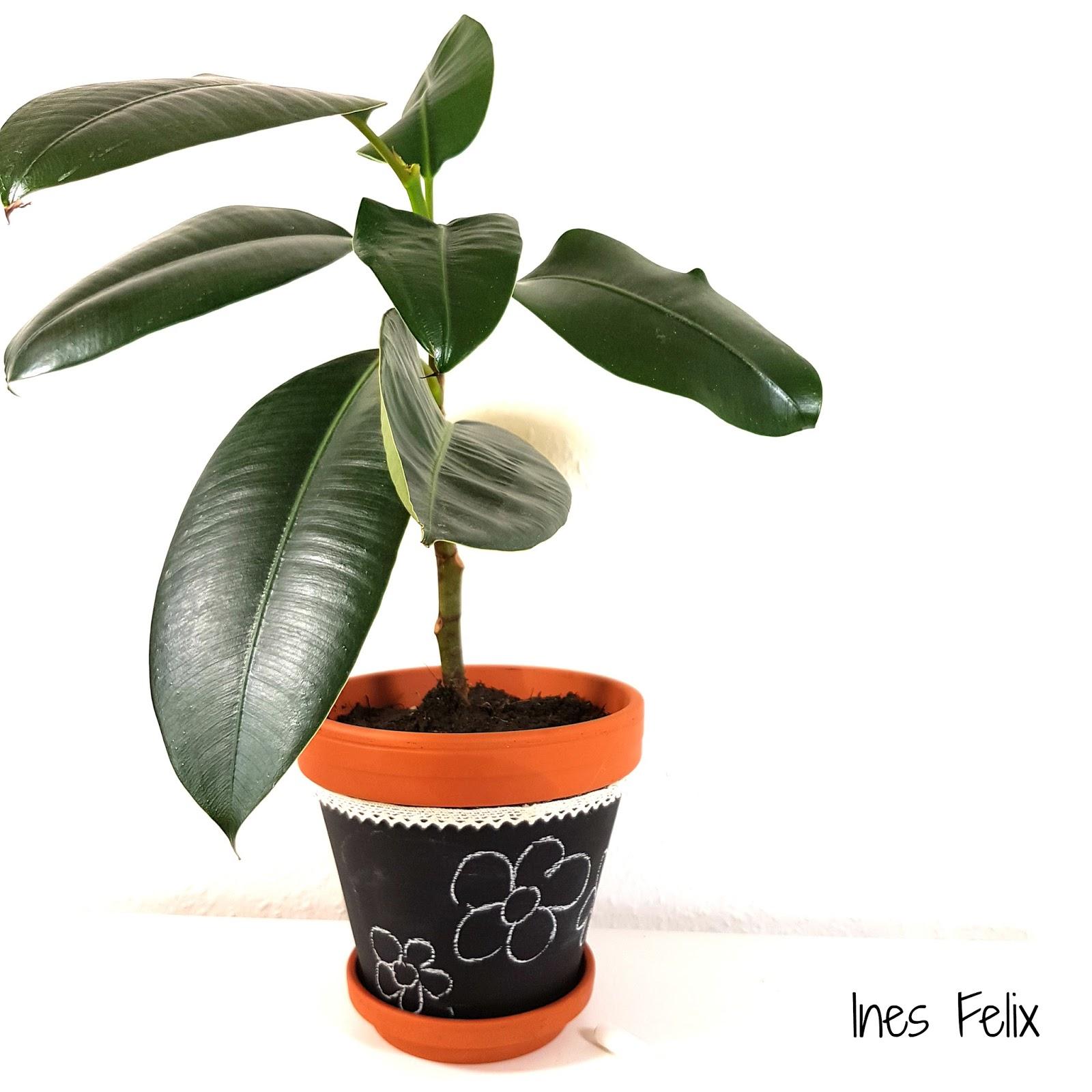 ines felix kreatives zum nachmachen das ist dein gummibaum personalisierte pflanzen. Black Bedroom Furniture Sets. Home Design Ideas