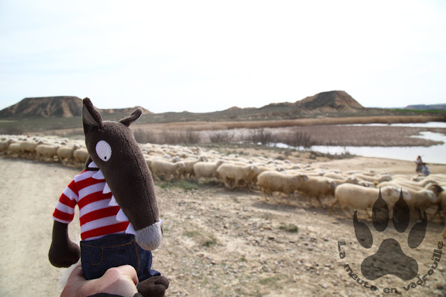 Espagne-navarre-bardenas-reales-balsa-cortinas-loup-moutons