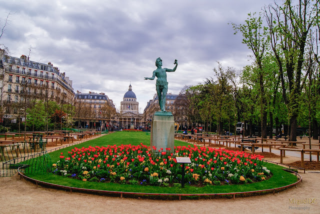 Tulipanes en Jardín de luxemburgo