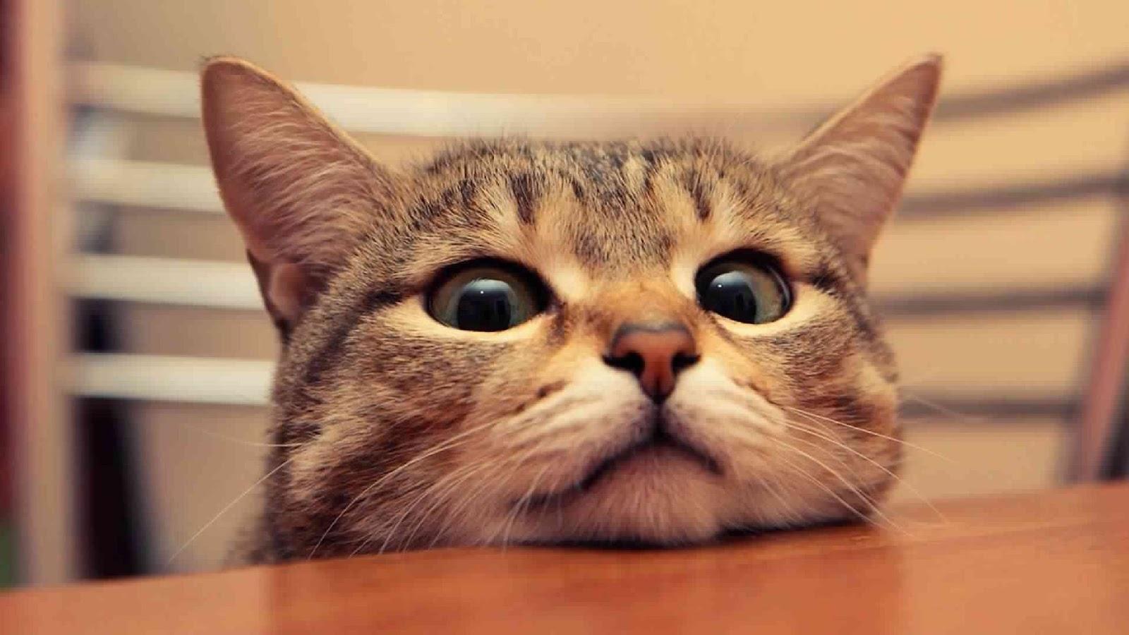 Gambar Animasi Lucu Kucing Terbaru  Distro DP BBM