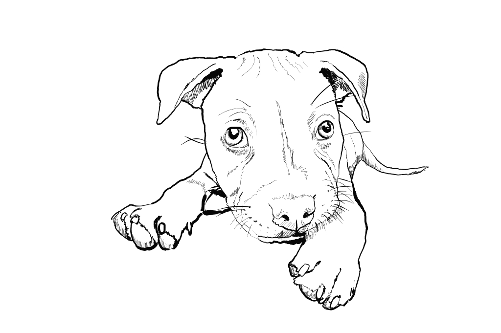 Cachorro De Raca Bonitos Desenhos Preto E Branco Para Colorir