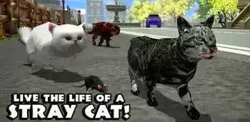Stray Cat Simulator Apk
