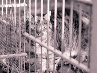 Katze im Tierheim fotografiert von fotograf michael schalansky