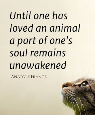 Until one has loved an animal a part of one's soul remains unawakened