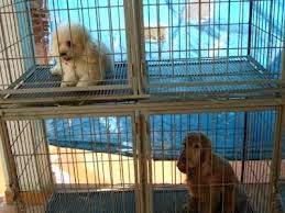cães em tratamento de imobilização