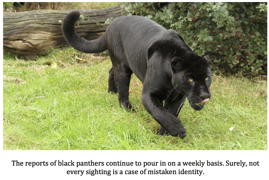 Texas Cryptid Hunter Black Panther Reports From The Lone