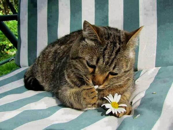Funny cats - part 88 (40 pics + 10 gifs), cat eats flower